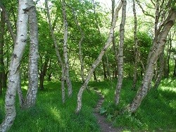forest, forests, sherwood forest