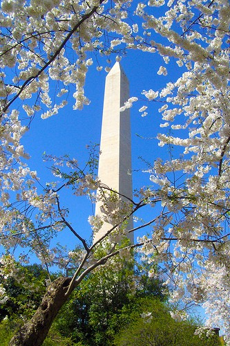 cherry blossom hotel packages washington dc