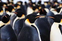 Antarctica penguin colony